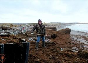 Récolte du goémon à Saint-Pierre et Miquelon