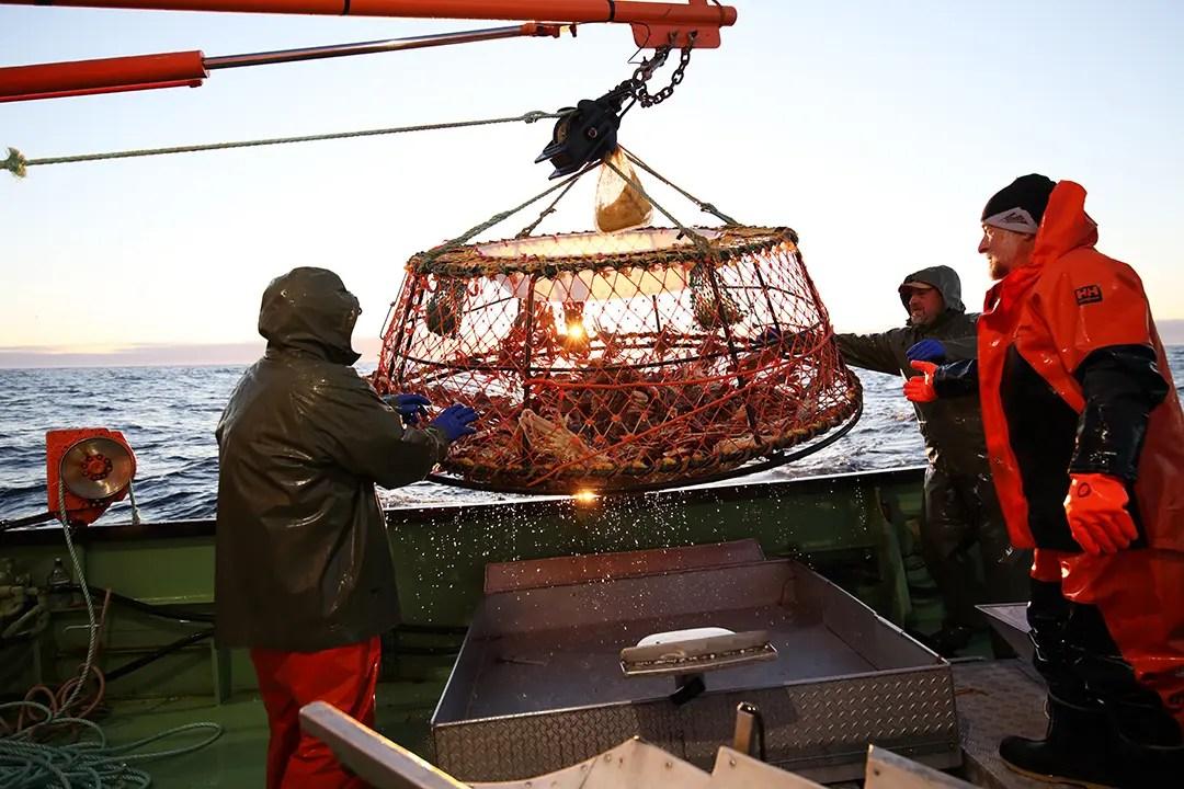pêche au crabe des neiges