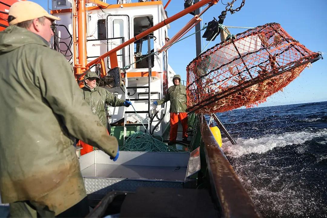 pêche au crabe des neiges casier sort de l eau marin treuil navire de pêche