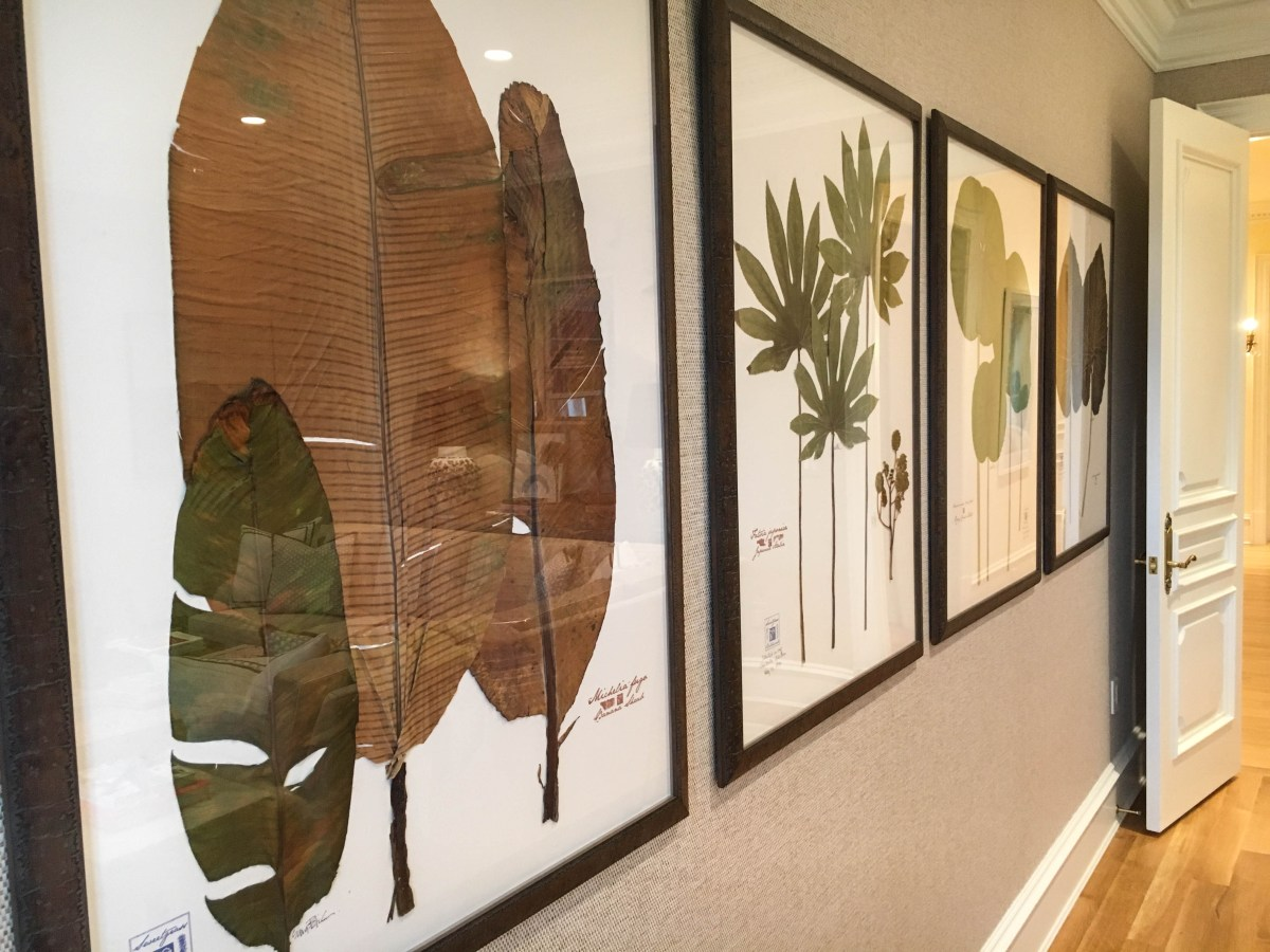 A series of four framed botanical pieces, each featuring a different type of leaf species with varied shapes and sizes on display.