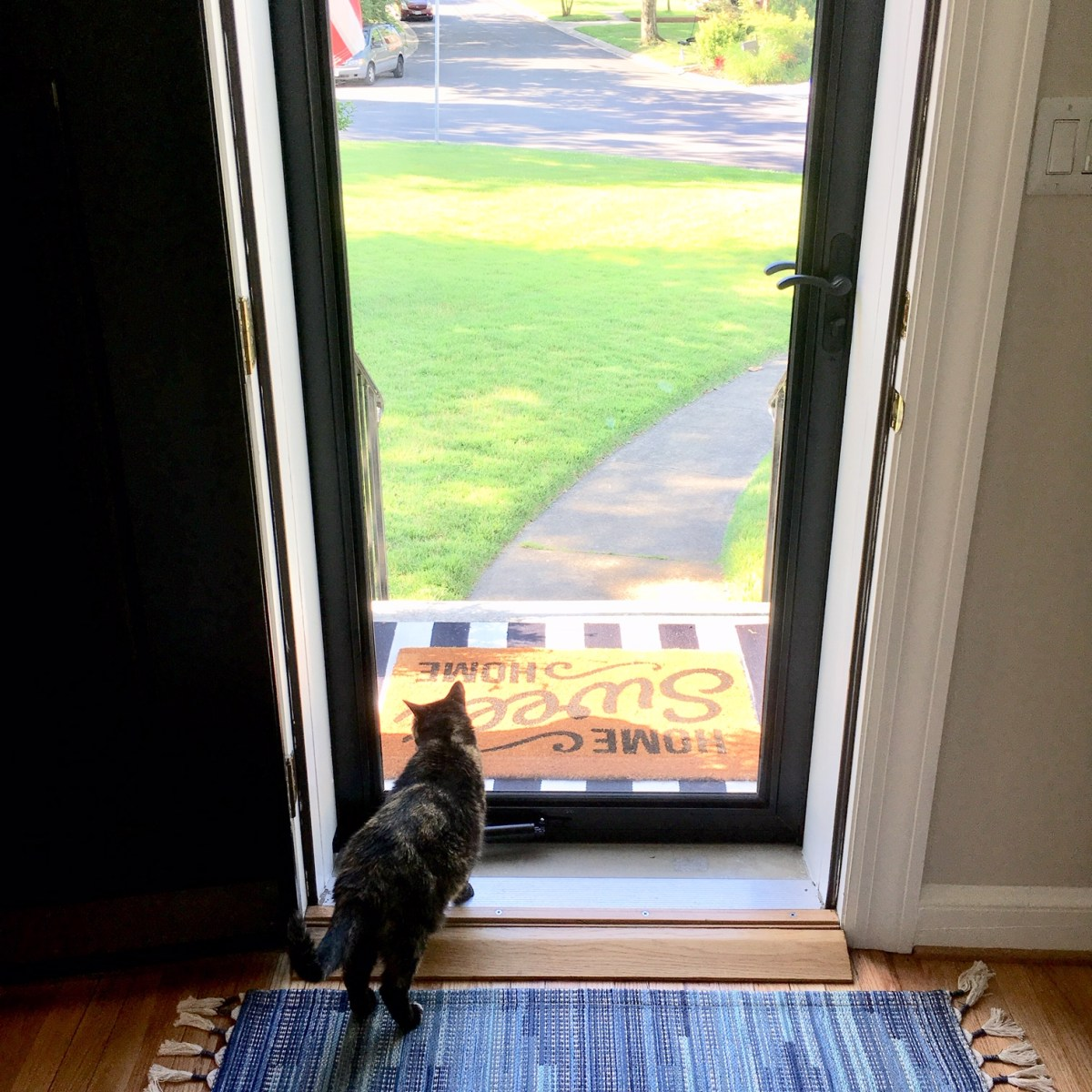 A cat stands just inside a home's front entrance, looking out into the neighborhood through the large glass panel of a storm door.