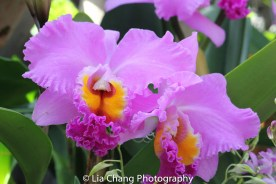 The Orchid Show: Orchidelirium. Photo by Lia Chang