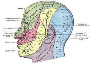 TN sensory dermatomes