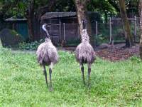 are you emu-sed?
