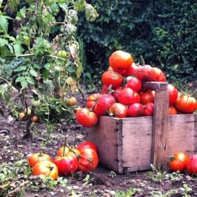 蔬菜在我的罐子裡-無水熬煮番茄醬Sauce tomates-6