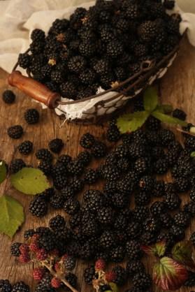 鄉村野黑莓