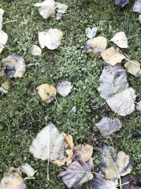 法國鄉村-秋天落葉