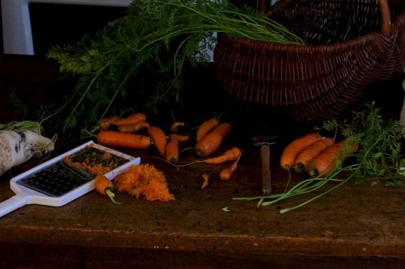 紅蘿蔔-1