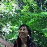 Daintree rainforest ferns