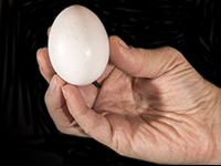 Photo of an egg held in a human hand.