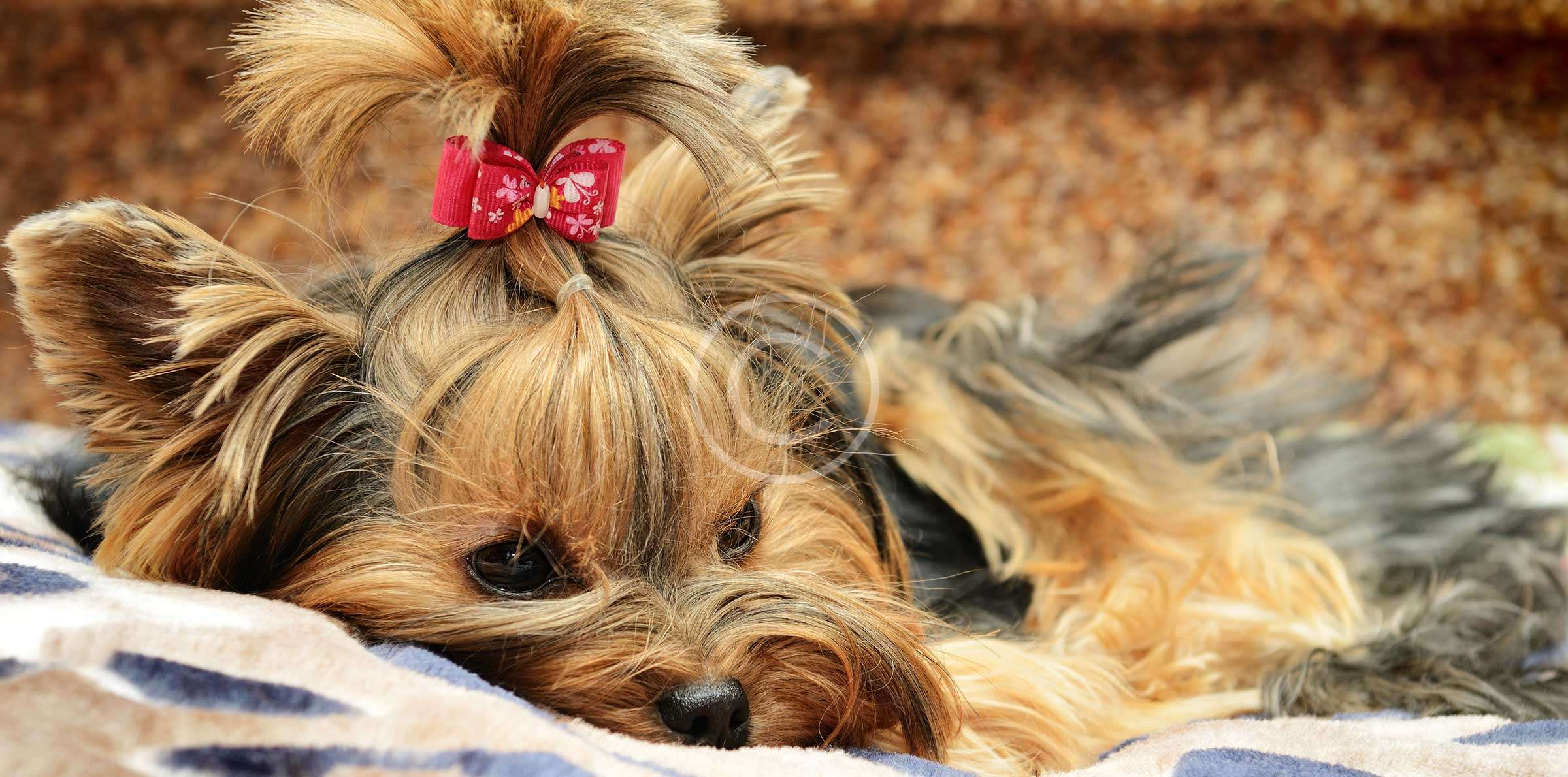 Essential Tips to Keep Your Pet Safe