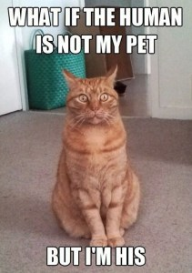 Surprised cat. What if I am the pet?