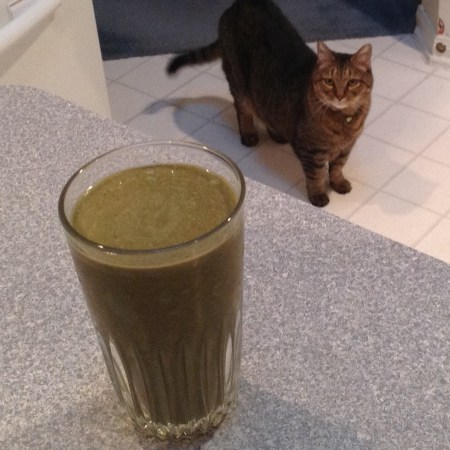 Smoothie with cat