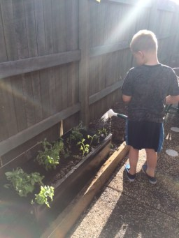 T watering in his vege patch the day we planted it.