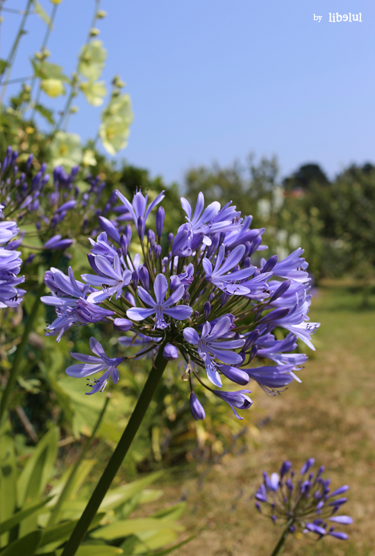 brehat-fleurs-04-by-libelul