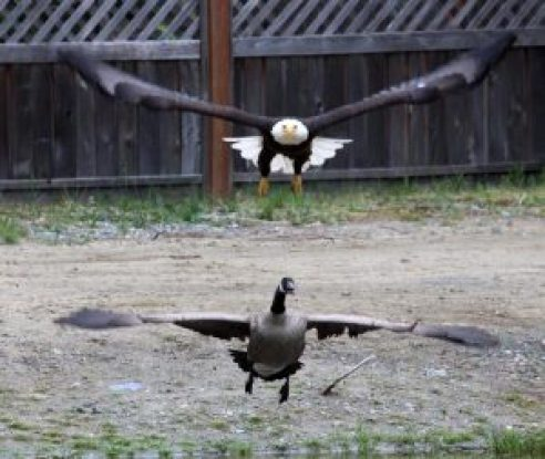 trump sends american attack eagle