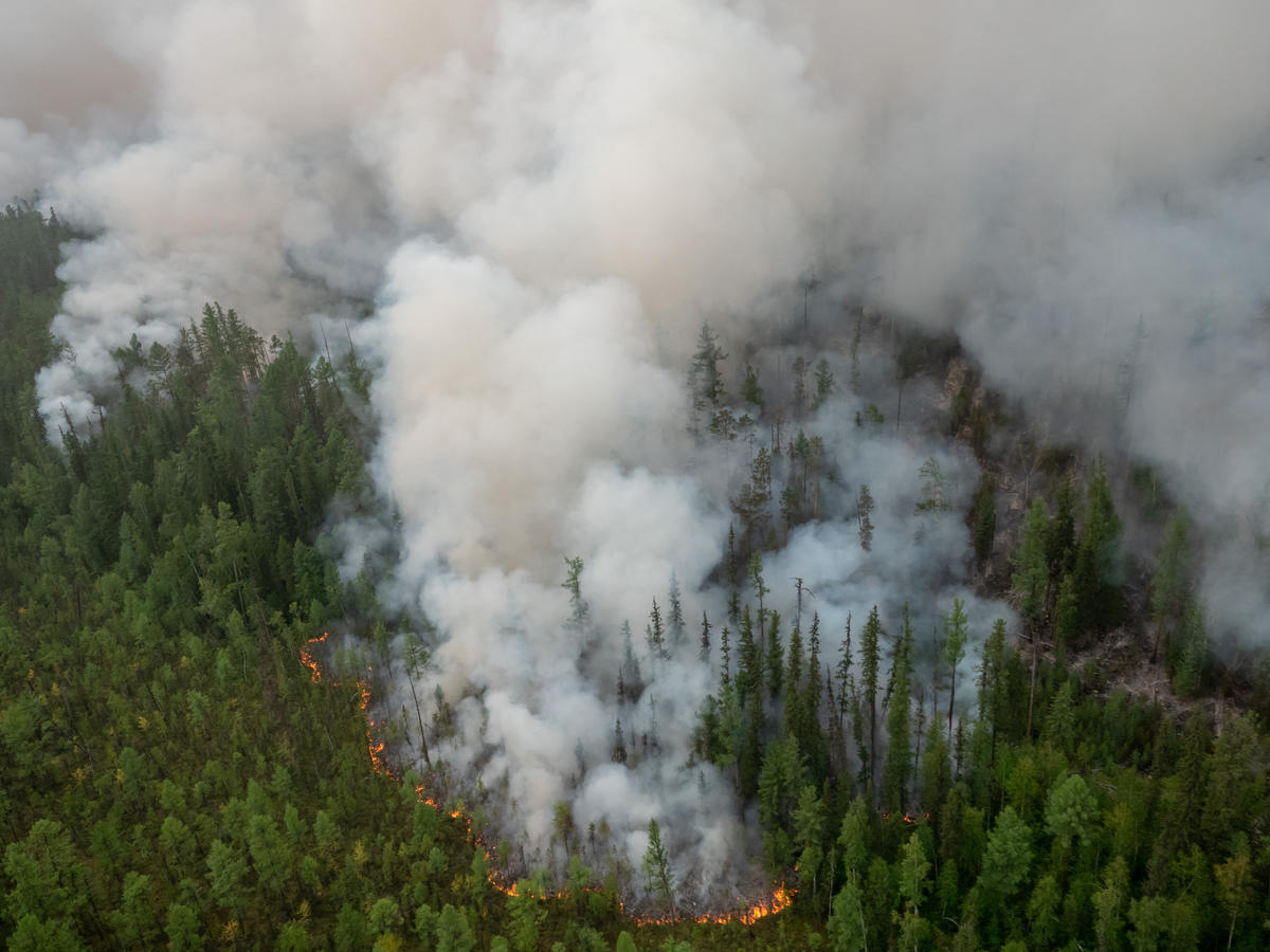 Global forests on fire: G7 must lead accelerated climate action – Greenpeace