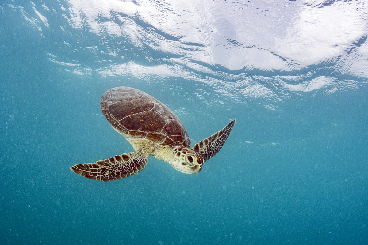 Microplastic levels in Sargasso Sea comparable to Great Pacific Garbage Patch