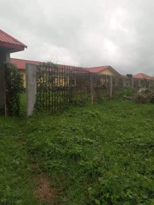 Gbozimor: Ogbe-Ijoh General Hospital Has Deteriorated To A Forest For Wild Animals – The Liberator