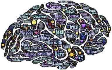 Les connexions du cerveau dans le processus de conscience