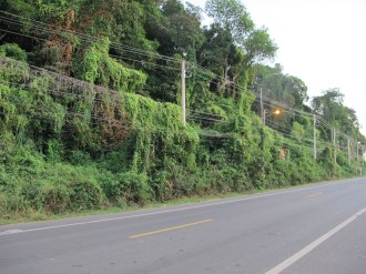 The jungle was taking over the electric lines