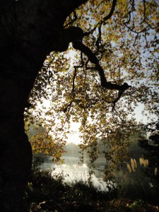 Battersea Park light through trees marvel at nature