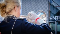 female member of a marching band plays brass