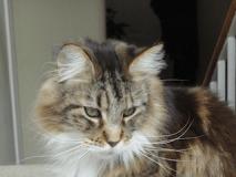 writer's pet cat TK in his glory