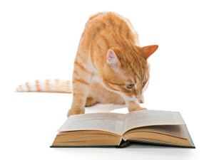 even cat has a favourite book