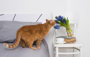 feline amateur sleuth sniffs out the crime