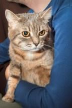 A Dirty Harry cat