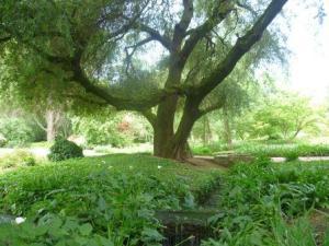Ninfa spreading tree sml