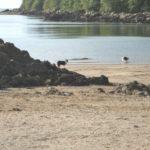 Dhoon beach