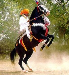 Indian rider on horseback wearing turban