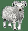 non-words -- to sheep