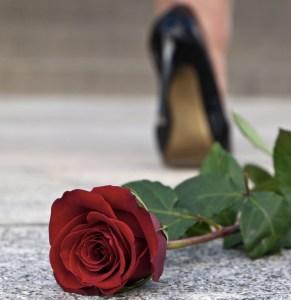 woman walking away, rose, cosy crime