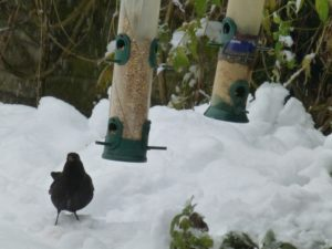 Reader Chemistry blackbird