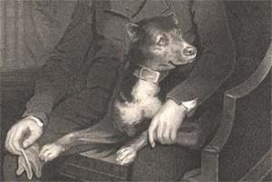 Sir Walter Scott's terrier Camp - 1805 by James Saxon