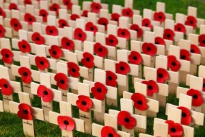 Armistice Day field of remembrance crosses