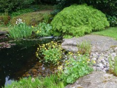 bright green Spring colours of acer palmatum, marigolds, irises