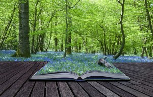 writing energy magic, book, bluebell wood