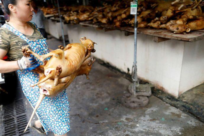 El presidente de Corea del Sur, Moon Jae-in, piensa prohibir el consumo de  carne de perro - Libertad Bajo Palabra