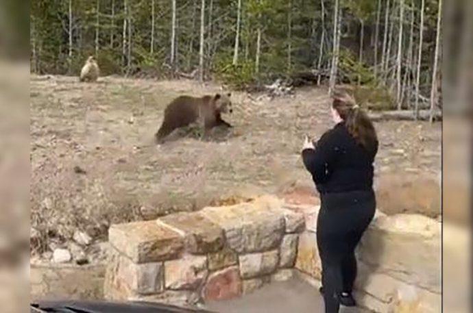 Mujer es detenida por tomarse una foto con una osa grizzli; se acercó demasiado y la encarcelaron cuatro días