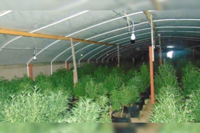 Oregón pide ayuda de la gobernadora para controlar las granjas ilegales de marihuana; se encuentran en estado de emergencia