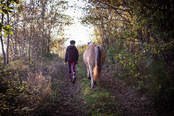 chevaux-confiance