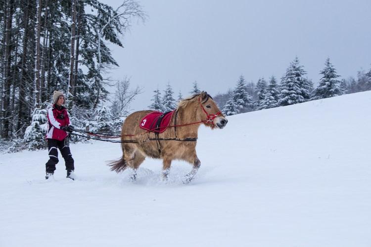 ski-joering-cheval