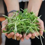 Microgreens for Container Gardening