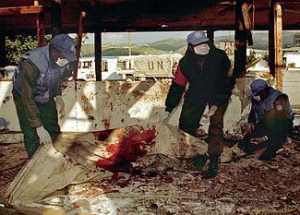 File:UNIFIL Peacekeepers (Qana 1996) Remove Artillery Attack Victim Remains.jpg Uploaded: 10 March 2010