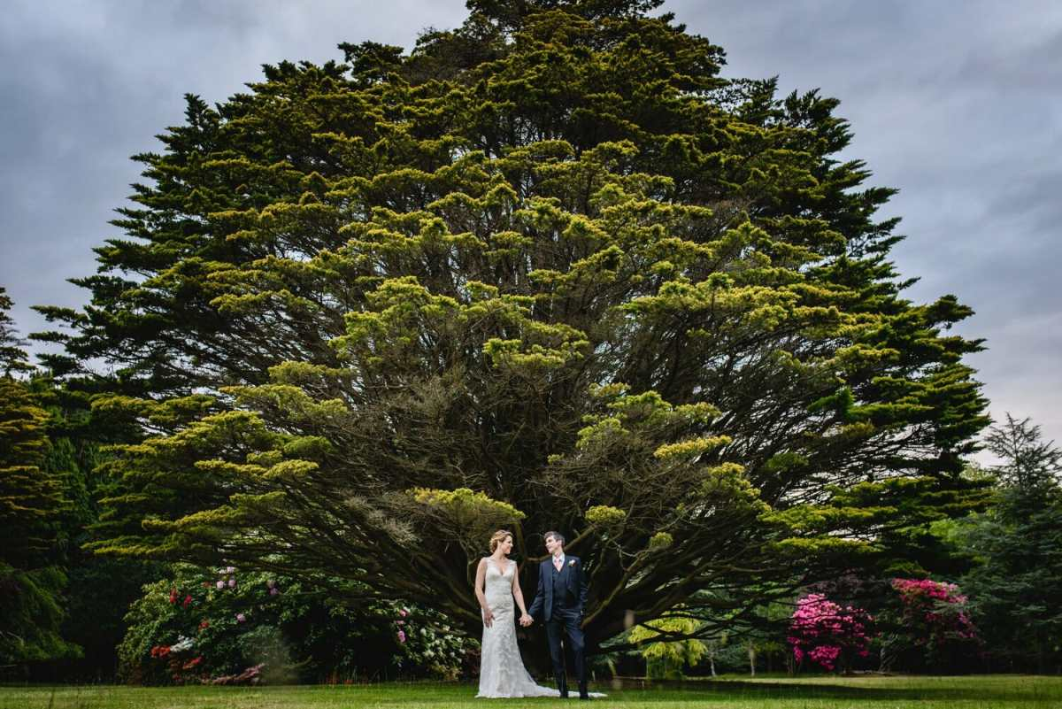 Studland Bay house Yew tree with bride and Groom