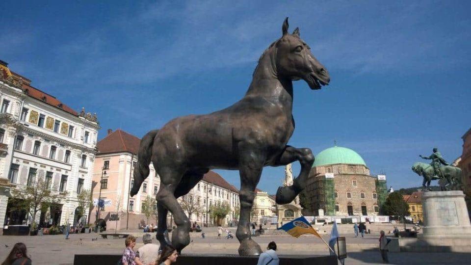 A Sforza-ló Pécs főterén.